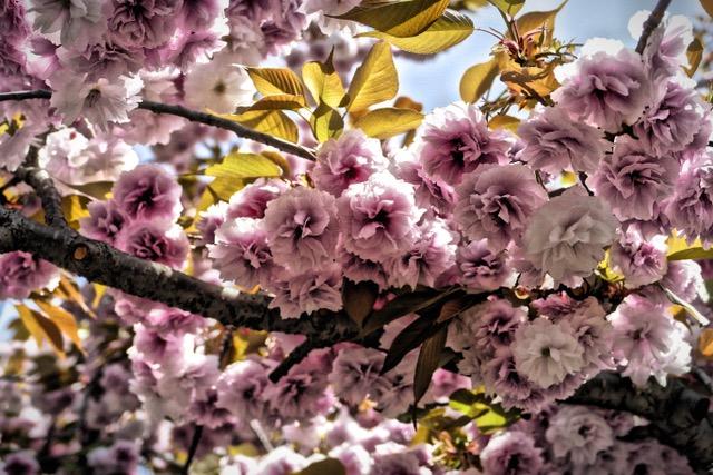 Sakura fever! At the Japan Mint in Osaka. Photo by Sydney Solis