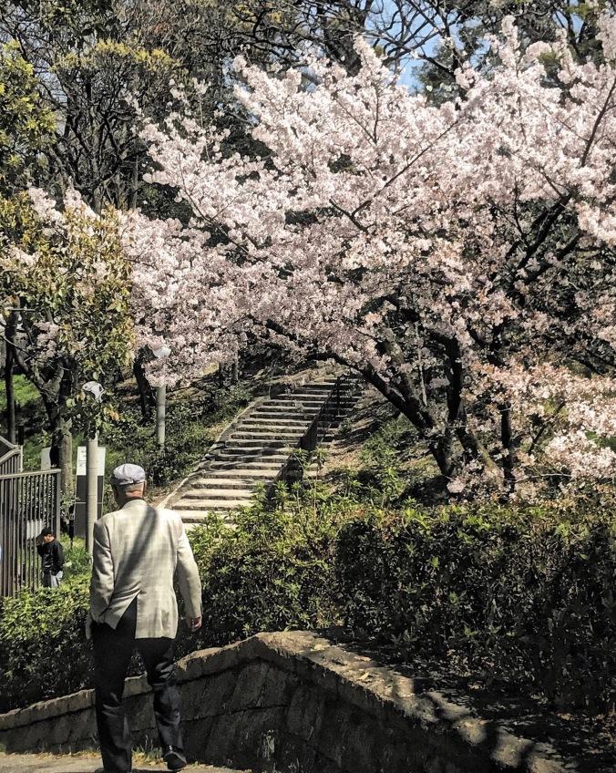 Tennoji Park Sakura Osaka, Japan