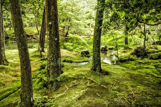 Moss garden at Saiho-ji Zen Temple, Kyoto Japan. Photo by Sydney Solis