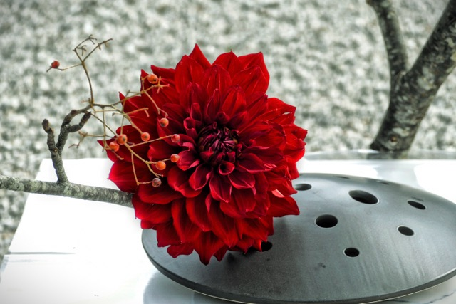 Red Dahlia Ikebana at Daikakuji 大覚寺 Temple, Kyoto, Japan.
