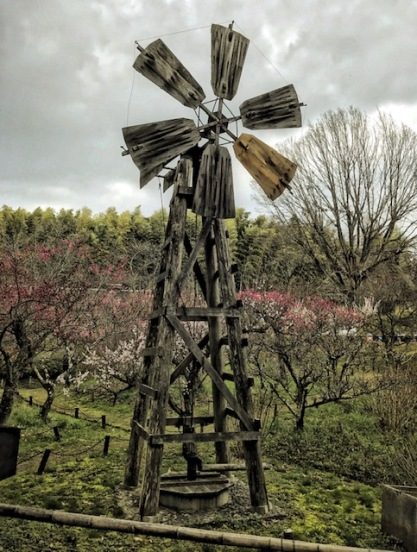 Windmill from Sakai at Plum blossoms at Open-Air Museum of Japanese Farmhouses, Osaka