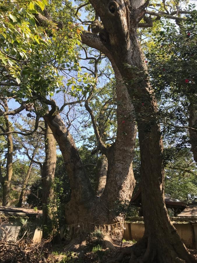 Munakata Shrine within Kyoto Gyoen National Garden