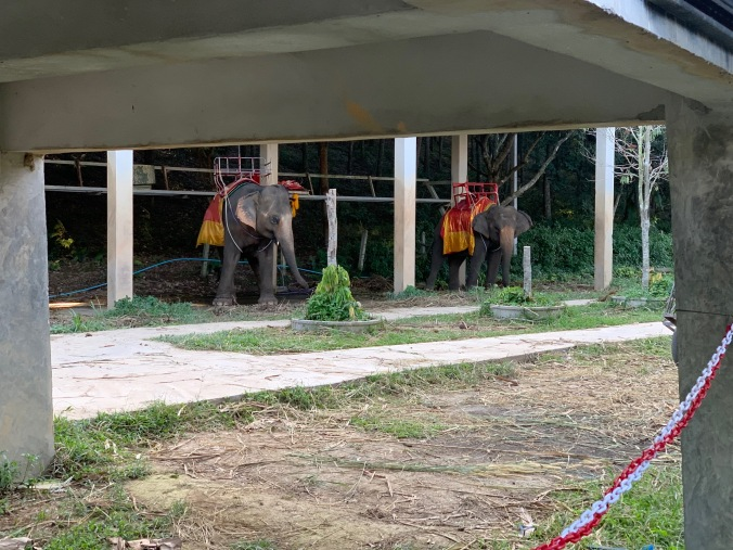 Elephants chained up, standing on hard concrete and saddled to give tourists rides at the Chang Puak Camp in Chiang Rai, Thailand I observed swaying and distressed.