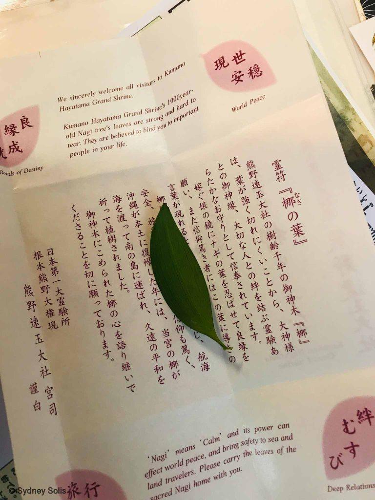Nagi leaf at Hayatama Taisha