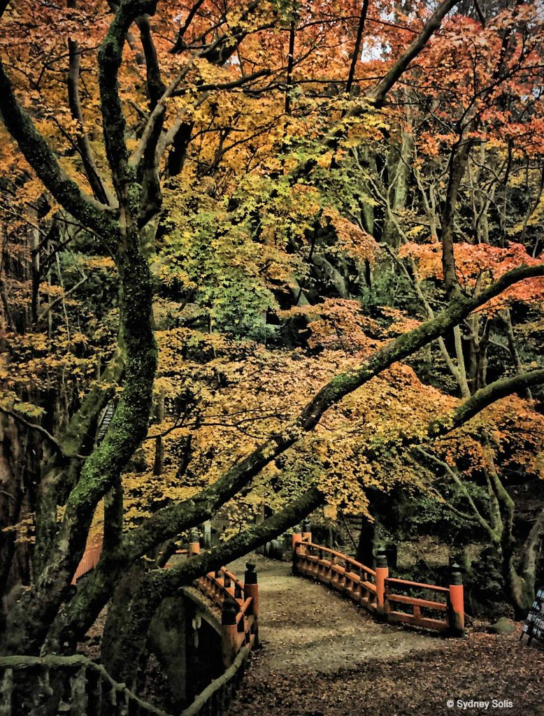 Japanese bridge and Autumn trees in Nara, Japan by Sydney Solis.