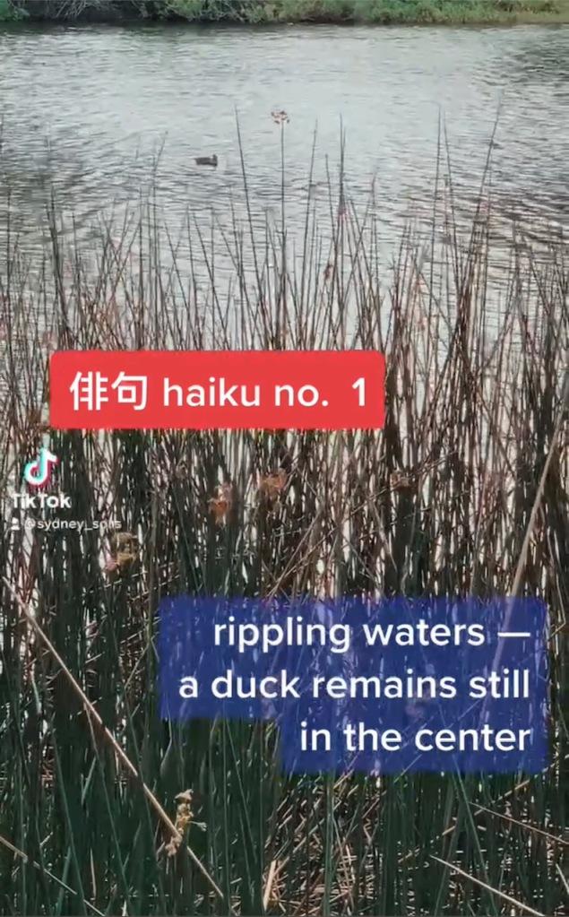 Haiku No. 1 film haiku on TikTok